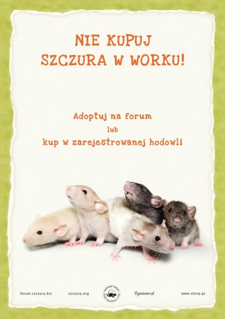 nie-kupuj-szczura-w-worku