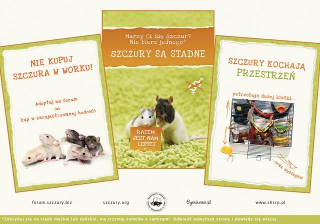 plakat-szczury-trio