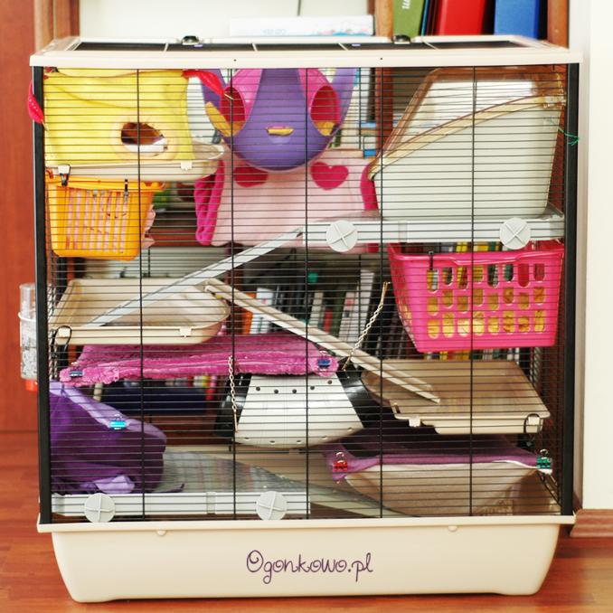 świetna klatka dla szczurków frodo