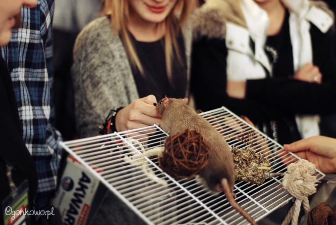 pokaz-szczurow-13