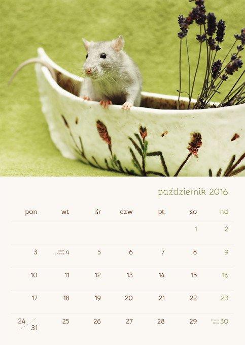 Październik - do zdjęcia pięknie zapozował Mandarin Cheesecake Rotta Taivas