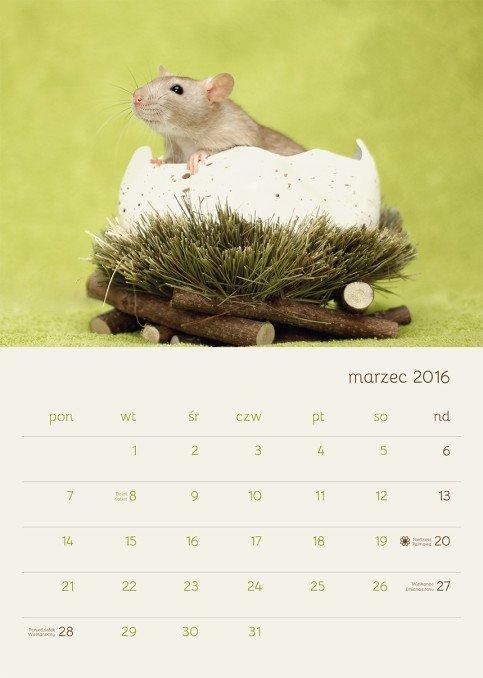 Marzec - do zdjęcia pięknie zapozował Mikan Rotta Taivas
