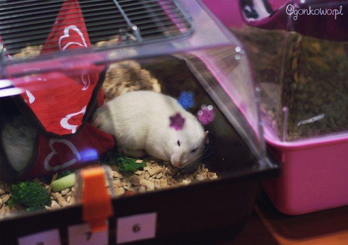 wystawa-odczarowac-szczury-10