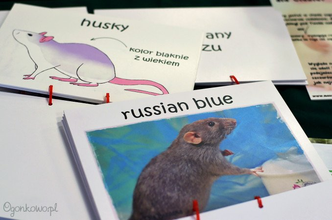 wystawa-odczarowac-szczury-14
