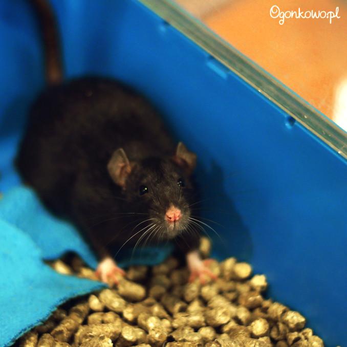 wystawa-odczarowac-szczury-2