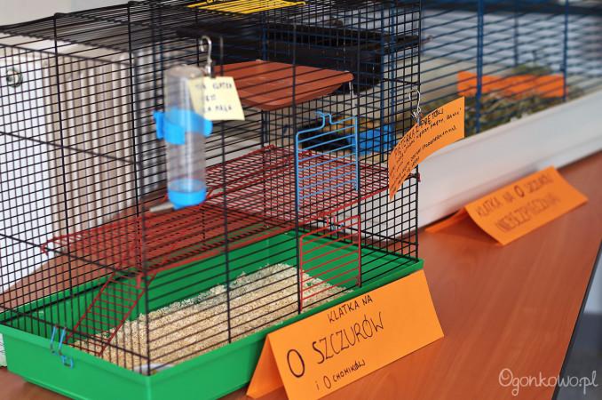 wystawa-odczarowac-szczury-3