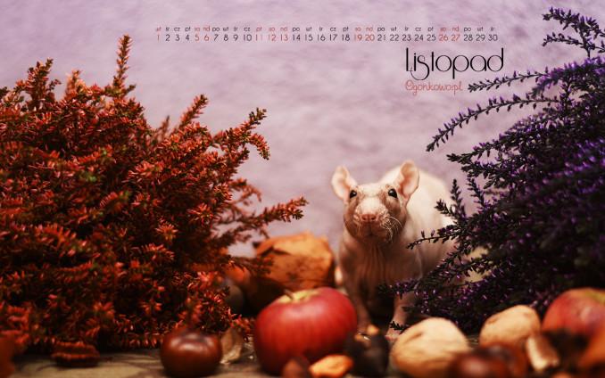 tapeta-szczur-listopad-2016-1440x900-kal