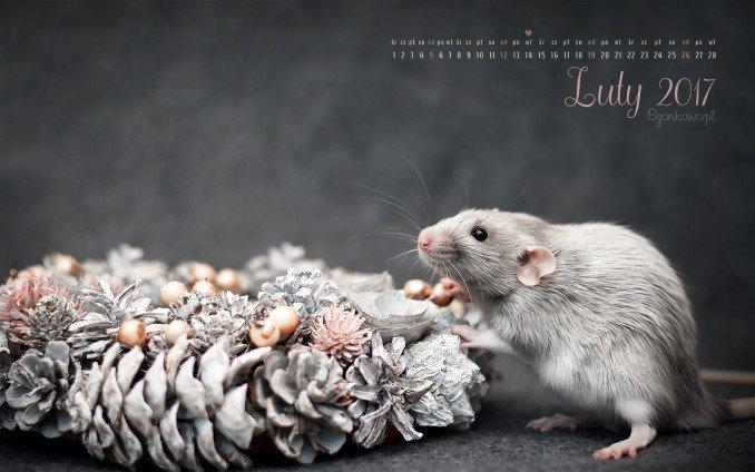 szczurza tapeta na luty